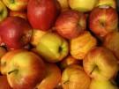 Jabłka źródłem błonnika