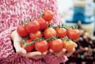 Pomidory przy karmieniu piersią