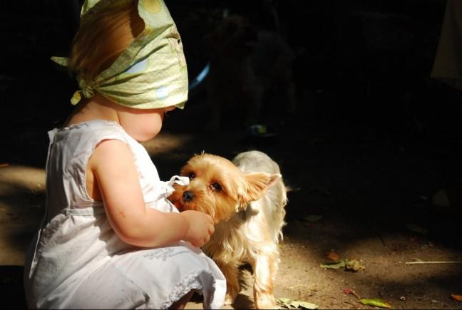 Pies dla dziecka
