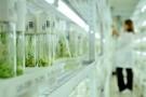 Skuteczność in vitro